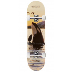 CCS Orca Skateboard Complete